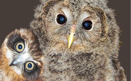 Small Breeds Farm & Owl Centre