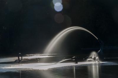 water-beast-lw-7650